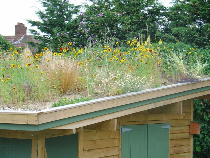 Green Roof Using A Sandy Base