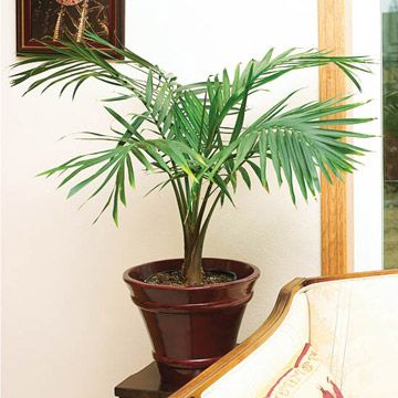 Tall House Plants Low Light 19 best indoor plants images on pinterest | indoor gardening