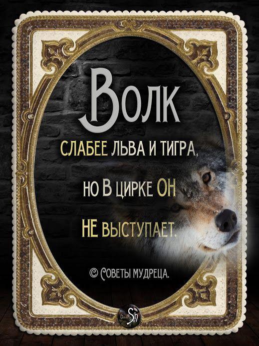 """Google+ Поговорки, афоризмы и шутки - Всегда к месту, всегда вовремя <a href=""""https://www.natr-nn.ru/blog/category/entertainment"""">Еще больше постеров</a>"""