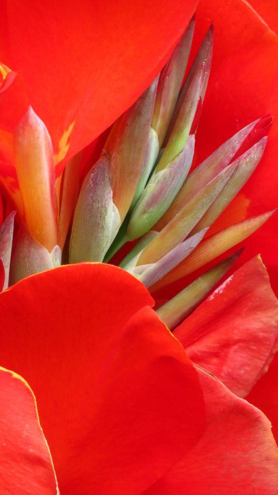 Indica - Florais de Saint Germain