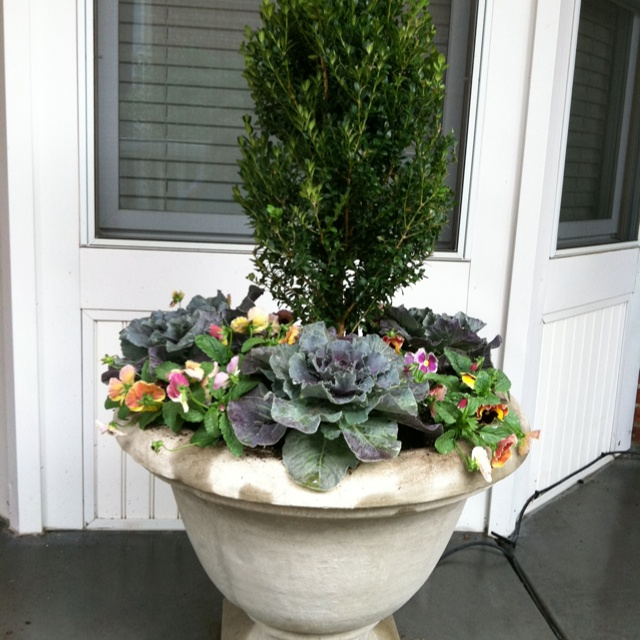 Fall Planter Boxwood Or Other Evergreen Cabbage Kale 640 x 480