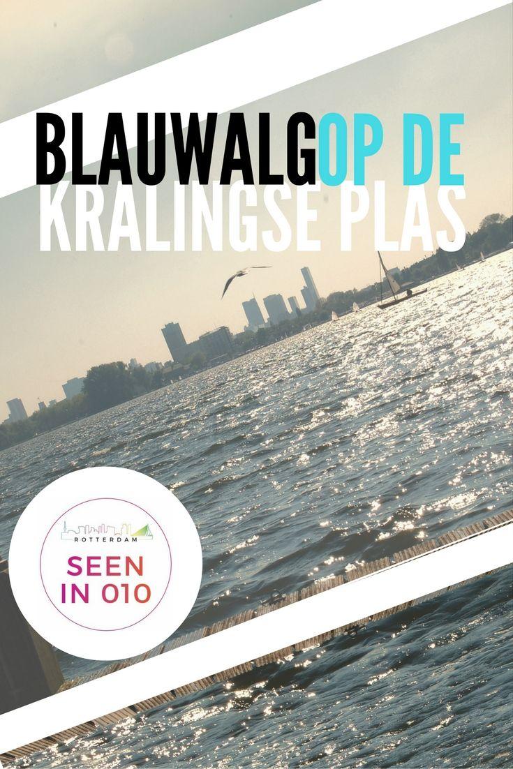 De gemeente Rotterdam en het Hoogheemraadschap van Schieland en de Krimpenwaard lijken maar geen grip te kunnen krijgen op de aanwas van blauwalg in de Kralingse Plas. Net nu er weer een aangenaam zomerweekend voor de deur staat, is het verboden voor mensen en dieren om de plas in te gaan.    #Rotterdam #Kralingen #Kralingseplas #Blauwalg #Zwemmen #Honden #koeling #halsband #verkoeling #Hitte #Zomer #hond