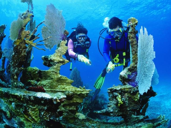 Trending Naples Florida Ideas On Pinterest Naples Usa - The snorkeling guide to florida 10 spots for underwater exploring