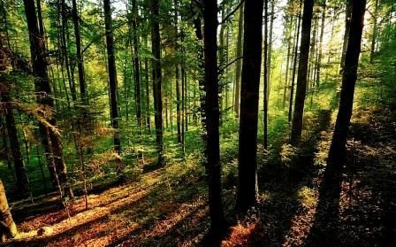 Tudtad, hogy a Földön mindössze 2 dolog van, ami oxigént termel? Az óceánok és az erdők! Mi pedig ezeket az erdőket pusztítjuk a faanyaguk miatt! Hogyan működik környezetvédelmi és faültetési programunk? Hogyan tudsz Te ebből jövedelmet szerezni? Nézd meg, és kérd a videókat ITT!
