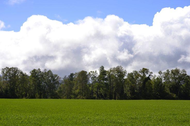 Tralcao, San José de la Mariquina. Foto de Erwin Leal Díaz.