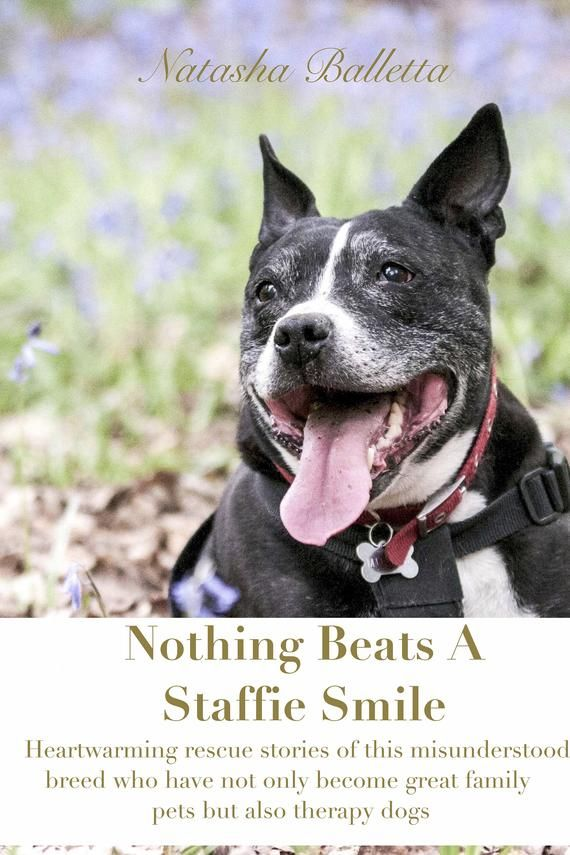 Rescue Staffie Stories Book True Rescue Stories Adopted Shelter Stories Uk Therapy Dogs Dog Stor Rescue Stories Therapy Dogs Animal Stories