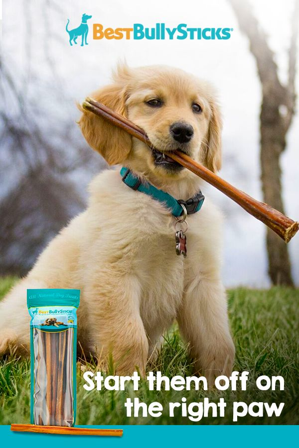 It's important to be choosy with what you feed your pup! You'll feel good knowing Best Bully Sticks are protein rich, 100% digestible and all natural! Shop the selection at BestBullySticks.com today.