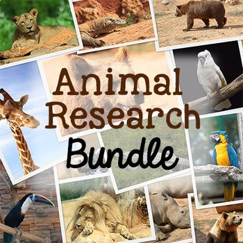 This is a bundle of two of my animal research resources: Animal Research Printables and Animal Classification Resources. Animal Research: These are animal research printables for primary students who are doing a project about an animal of their own choosing. This is a fun animal research project to do at the end of the year.