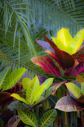 Tropical Foliage in Arenal, San Carlos, Costa Rica, Central America | Flickr - Photo Sharing!