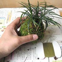 Como hacer un bonsai kokedama