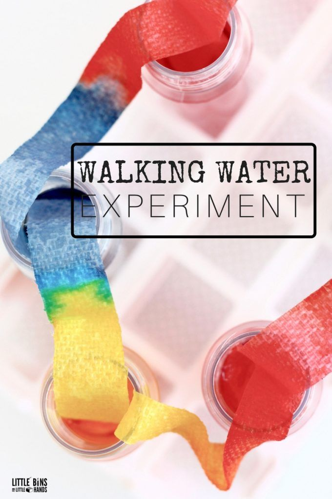 Walking Water Science Experiment for Kids STEM and Rainbow Science
