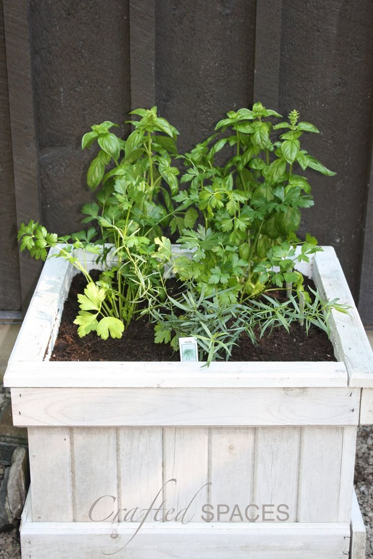 Herb garden. For the front porch?