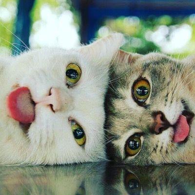 That's it! no more cat nip!