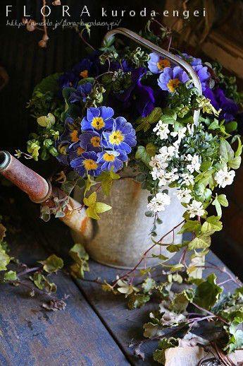 ブルーのプリムラ・ジョウロの寄せ植え の画像|フローラのガーデニング・園芸作業日記