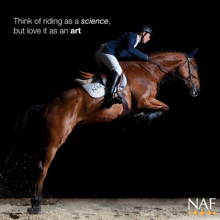 Horse and rider as one: happiness