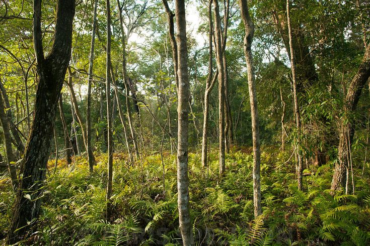 Sub-Tropical Rain forest, #Noosa #Forest  #RainForest #Australia #Nature #Landscape #Qeensland #