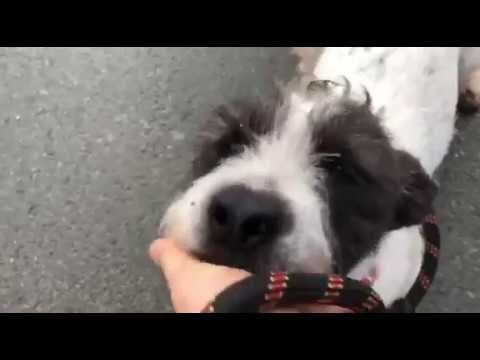 Layla Ein Hund In Not Aus Dem Tierschutz Youtube Hunde In Not Hunde Tiere