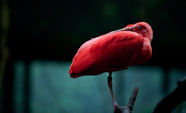 Red. by Moeys Photography, via Flickr