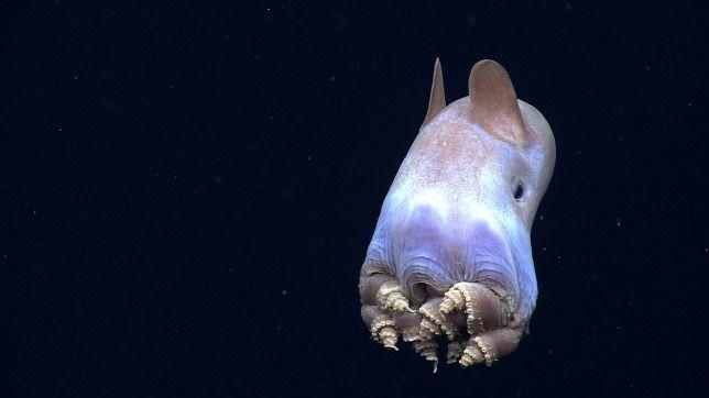 Nagyon furcsa élőlényeket fedeztek fel a mélytengeri aljzaton
