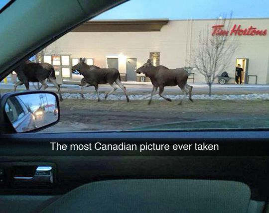 The most Canadian picture ever taken...