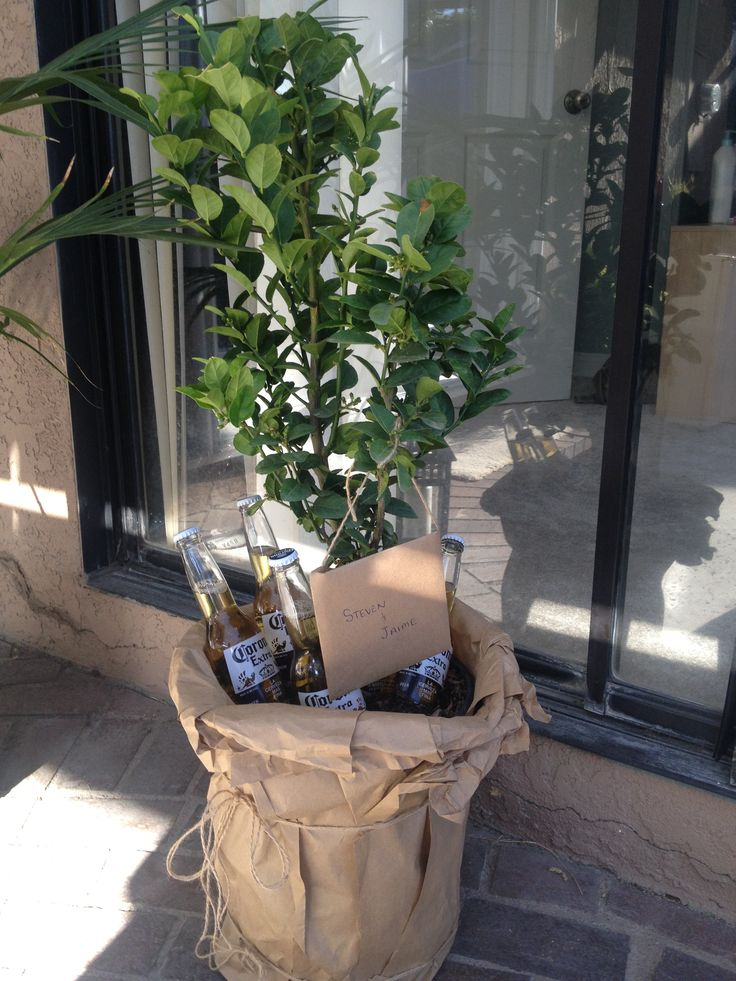 Housewarming party gift idea  Lime tree with Coronas at base wrapped in brown paper with raffia
