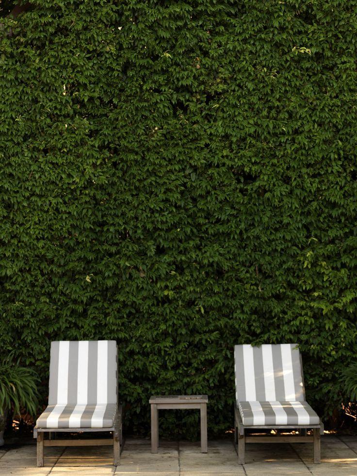 BELLEVUE ABODE   alwill  #outdoor #hedge