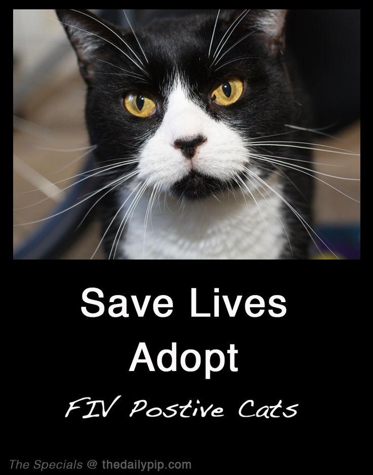 Fiv cat upper respiratory infection