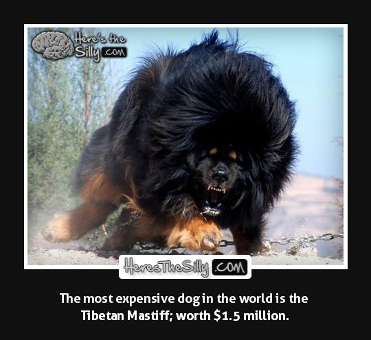 Most expensive dog | Most Expensive | Pinterest ...