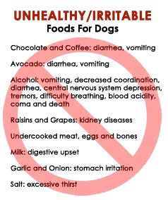 Unhealthy and irritable foods for dogs #bad #food #animals #pets #alcohol #avocado #milk #garlic #onion #salt #raisins #grapes #chocolate #coffee #undercooked #dogs #tips #advice #infographic #health #life