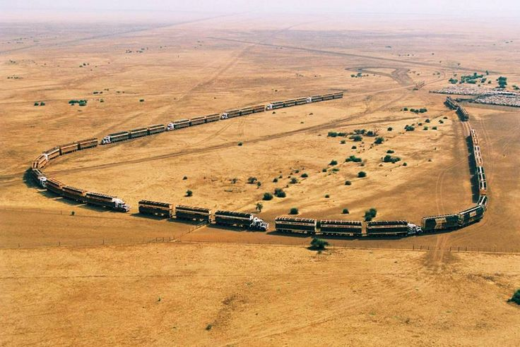 "17 ""Road Trains"" await to load 2856 cattle at Helen Springs Station, Northern Territory, Australia"