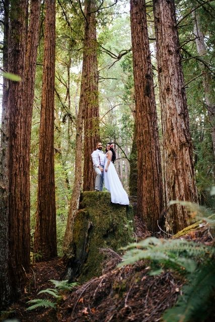 Gorgeous Private Redwood Venue In California Perfect For Weddings Of All Sizes