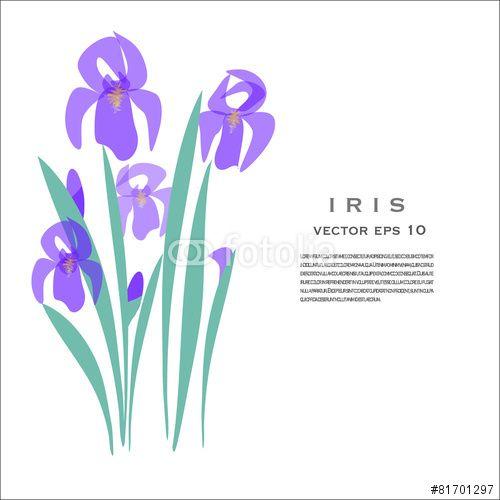 #Vector #illustration #Iris #Spring #Flower #greetingCard #garden #flora #floral
