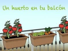 Hoy les mostraremos paso a paso como hacer un huerto que te provea de vegetales durante casi todo el año. Sembrar nuestros propios alimentos además de ser excelente para nuestra salud, nos permite ...