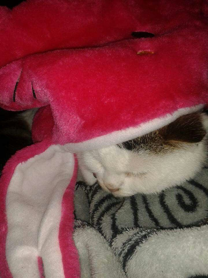 Roxy Hiding Under The Pink Cat Hat.