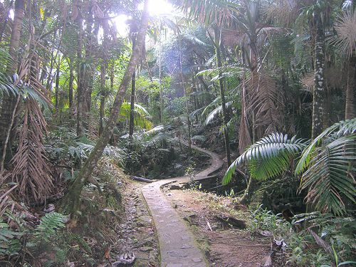 El Yunque National Forest in Rio Grande, Puerto Rico. Don't be a fool and try this walk w flip flops on like i did.