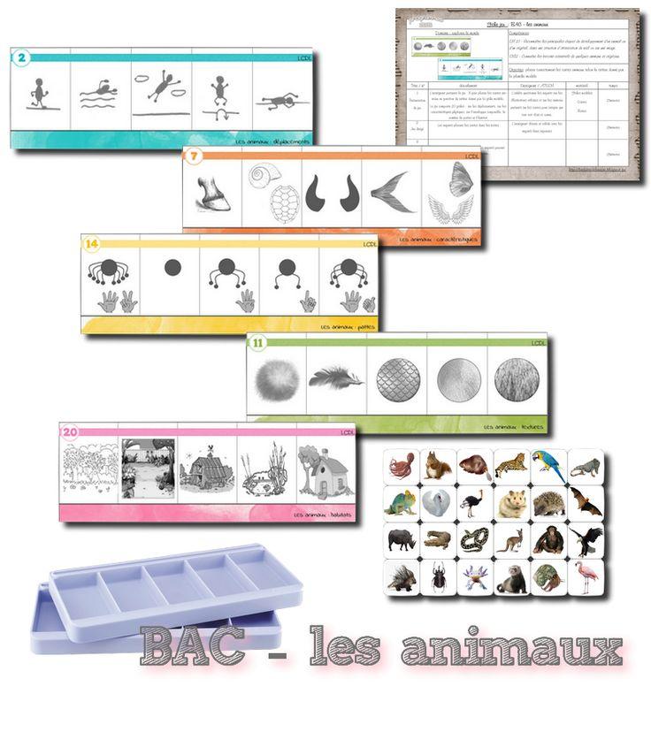 Boîtes à compter caractéristiques des animaux