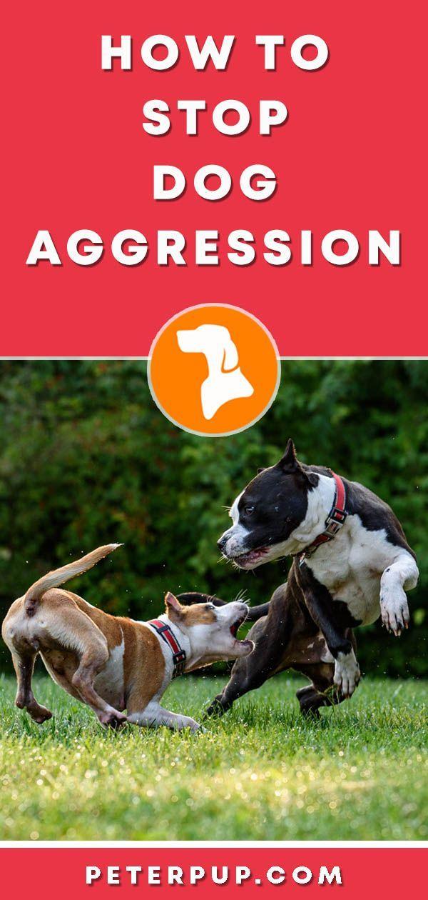 How To Calm Dog Aggression Dominance Aggressive Dog Dog
