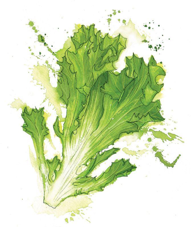 Vegetables - Georgina Luck