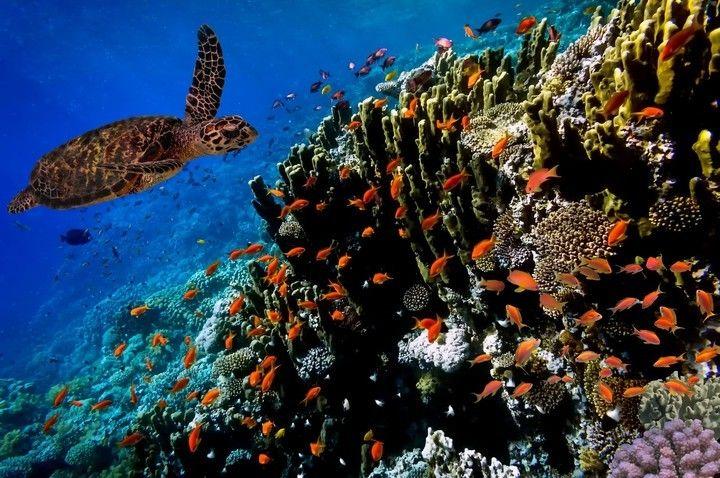 Bonaire, una de las tres islas de las Antillas Menores ... las otras dos son Aruba y Curazao.