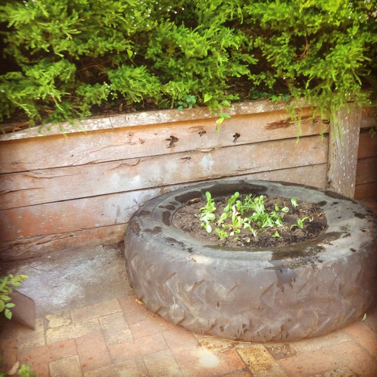 An old tractor tyre we found behind the garage makes a perfect veggie planter!