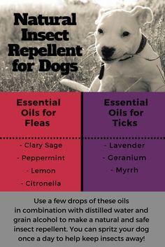 25 best ideas about flea repellant on pinterest natural flea spray homemade flea spray and. Black Bedroom Furniture Sets. Home Design Ideas
