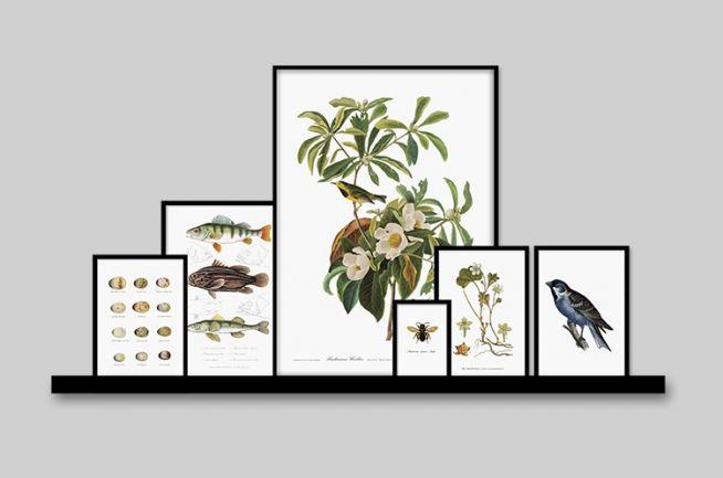 Botanik-plakat med fugle...