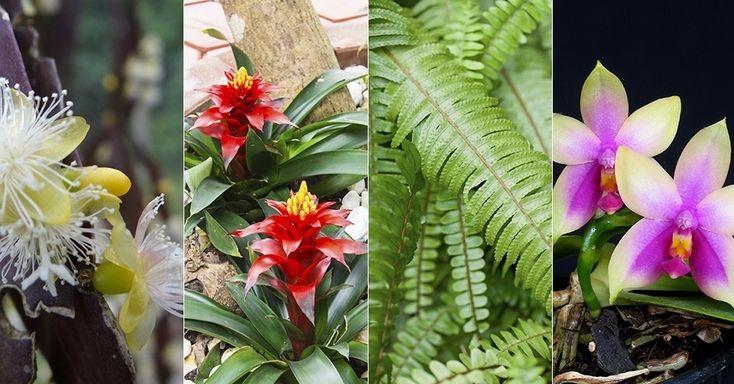 Plantas epífitas verdadeiras são as que vivem sobre outras plantas, sem retirar nutrientes delas, mas apenas se apoiando nelas; não são parasitas. A sobrevivência das epífitas está relacionada à luz, umidade e ao tipo de substrato, são plantas que necessitam de sombreamento e não se dão bem em locais abertos. As florestas tropicais mais úmidas são próprias para elas. Entre as epífitas ornamentais mais comuns temos orquídeas, bromélias, samambaias, avencas e cactáceas.