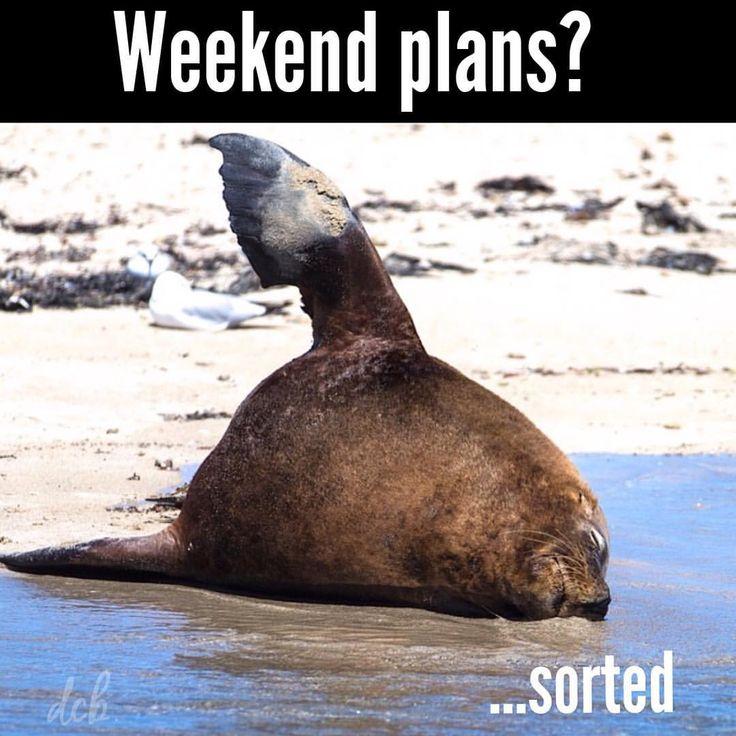 Weekend Plans https://www.facebook.com/dcbpets Dr. Chris Brown