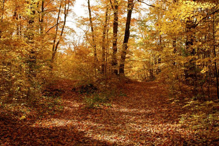 Forest in the Orillia, ontario area.