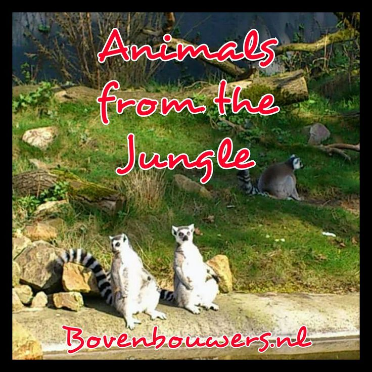 Animals from the Jungle - Thema 'In the Jungle' - Bovenbouwers.nl