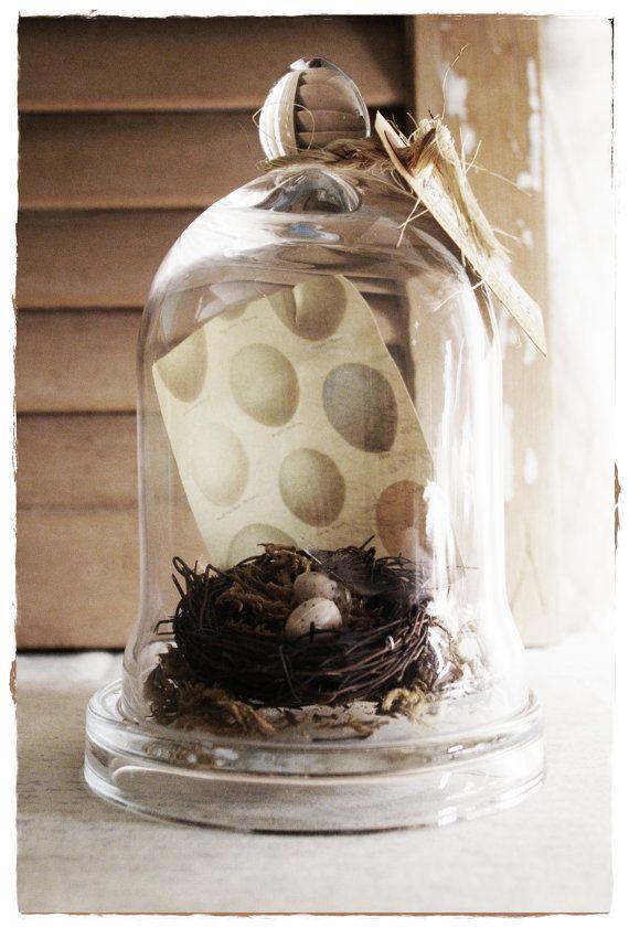 Birds Nest & Print Cloche Jar