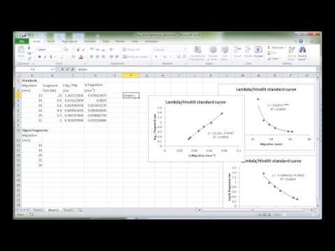 MBLG1 DNA electrophoresis analysis in Excel - YouTube