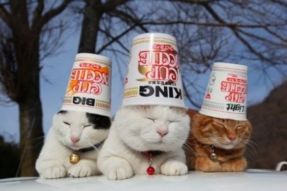 We Know That the Wrong: Cup A Noodle Cats, Cute Cats, Cats 24 7, Cats Dogs, Kitty Noodlezz, Animal, Furry Friends, Neko Cat