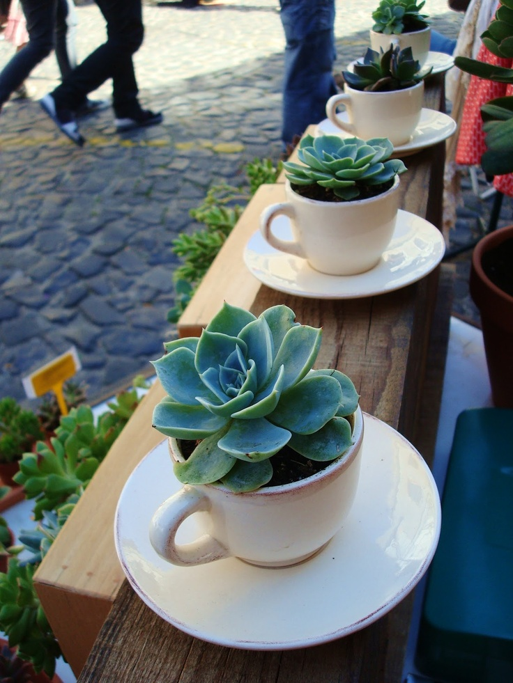 Love these cups of suculents. Wouldn't they make a pretty gift?